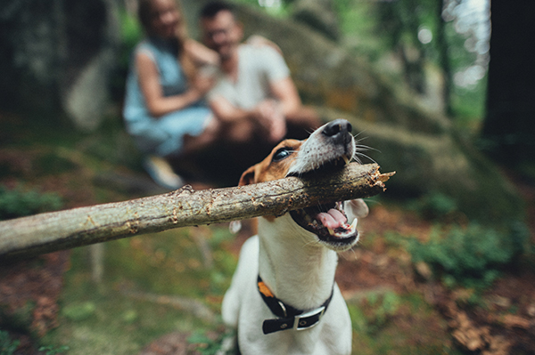 dog_stick.jpg